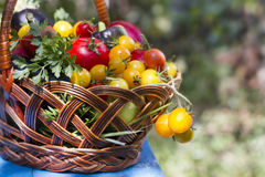 Basket with vegetables. In the garden Stock Photography