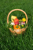 Basket with vegetables is on the grass. Wicker Basket with vegetables is on the grass Royalty Free Stock Photography