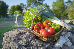Basket of vegetables placed on a wall, garden in background Royalty Free Stock Photos
