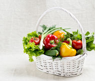 The basket of vegetables. Tomatoes, cucumbers, peppers, radishes. The basket of vegetables.  Selective focus Royalty Free Stock Image