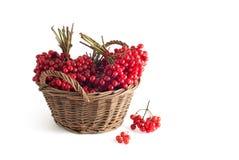 Basket with a viburnum Stock Photo