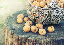 Basket with walnuts Royalty Free Stock Photography
