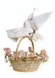 Basket with wedding flowers and doves. Studio shot Royalty Free Stock Image