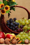 Basket whit fruits. Apples, grapes, nuts royalty free stock photography