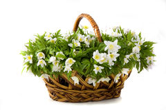 Basket of white flowers Royalty Free Stock Photo