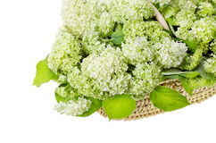 Basket with white  hydrangea Stock Photos