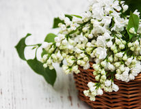 Basket with white  lilac flowers Stock Photo