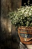 Basket with wild daisies on the porch of a house. Gardening concept