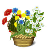Basket with wild flowers Royalty Free Stock Photo