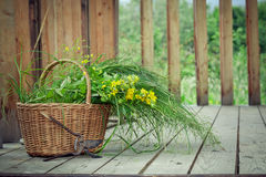 Basket of wild flowers and old pruning shears. Basket of wild flowers and grass and old pruning shears on country house wooden steps Stock Photography
