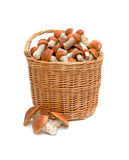 A basket of wild mushrooms. Closeup on white background Royalty Free Stock Photo
