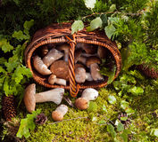 Basket of wild mushrooms. Wicker basket full of wild mushrooms on a background of green leaves and moss Stock Photo