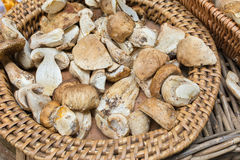 Basket of wild mushrooms cut and prepared Stock Photography