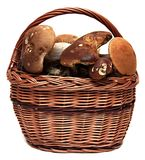 Basket of wild mushrooms isolated on a white Royalty Free Stock Photography