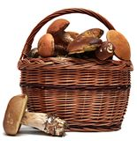 Basket of wild mushrooms isolated on a white Royalty Free Stock Image