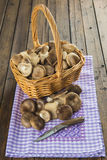 Basket with wild oyster mushrooms Stock Photo