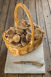 Basket with wild oyster mushrooms Stock Image