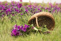 Basket with wild purple mallow lying on ground Stock Photos