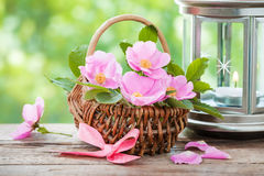 Basket with wild rose flowers and vintage lamp Stock Image
