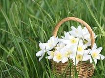 Basket of wild spring flowers Royalty Free Stock Photos