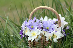 Basket of wild spring flowers Stock Images