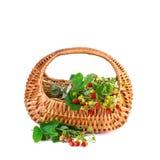 Basket of Wild Strawberries isolated on white background Royalty Free Stock Photo