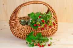 Basket with wild strawberries Stock Images