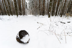Basket in Winter Forest Stock Image