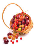 Basket wirh ripe cherry, currants and gooseberries Stock Images