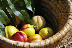Free Basket With Apricots Royalty Free Stock Photography - 6329517