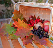 Basket With Autumn Leafs And Berries Stock Photography