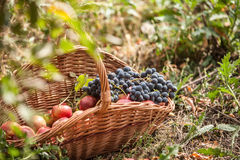 Basket With Fruit Stock Photo
