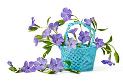 Free Basket With Periwinkles Stock Photo - 39885920