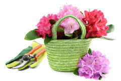 Free Basket With Rhododendron Flower Heads And Garden Tools Stock Photography - 67149902
