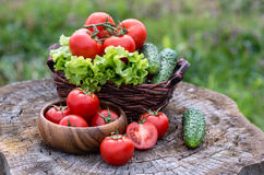 Basket and wooden plate with fresh vegetables (tomatoes, cucumbe Royalty Free Stock Photography