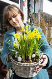 Basket with yellow daffodils Royalty Free Stock Images