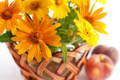 Basket of yellow flowers. Next to   two peach Stock Images