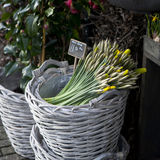 Basket with yellow narcissus Royalty Free Stock Photo