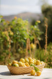 Basket of yellow plums Royalty Free Stock Images