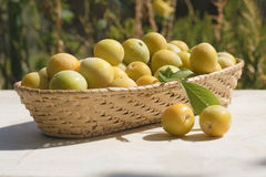 Basket of yellow plums Stock Photo