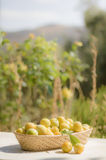 Basket of yellow plums Royalty Free Stock Photography