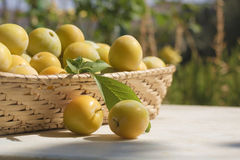 Basket of yellow plums Stock Image