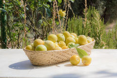 Basket of yellow plums Royalty Free Stock Photos