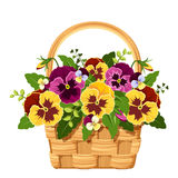 Basket with yellow and purple pansy flowers. Vector illustration. Royalty Free Stock Photos