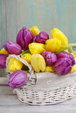 Basket of yellow and violet tulips on wooden table Stock Image