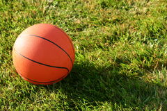 Basketball. In grass with sun shining on it Royalty Free Stock Photos