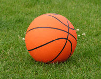 Basketball. Basket ball on fresh spring grass Stock Images