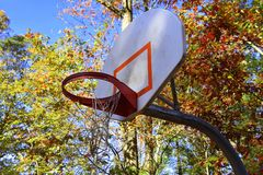 Basketball backboard with autumn tree background. Basketball backboard with orange rim and torn net. Outside with trees with leaves that are autumn colors Stock Photography