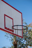 Basketball backboard in the palms Stock Images