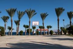 Basketball backboard in the palms Stock Photo